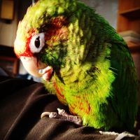 Oscar the Parrot #1 by PatrickJr