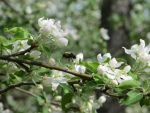 Busy Bee by SolitaryGrayWolf