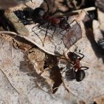 Wood ants by jynto