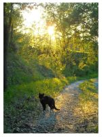 walking with the cat by Tamika91