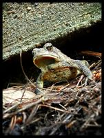 Mr. Toad by ackeibler