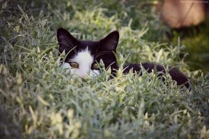Stalker Kitty. by pasofino6