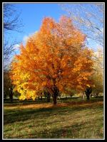 Gold Tree by midgard