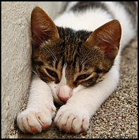 Hate Summer by dbstrtz