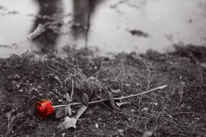 Rose from Auschwitz by phodees