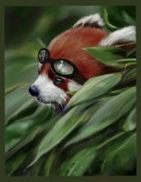 Red Panda Scout PS CC by nosoart