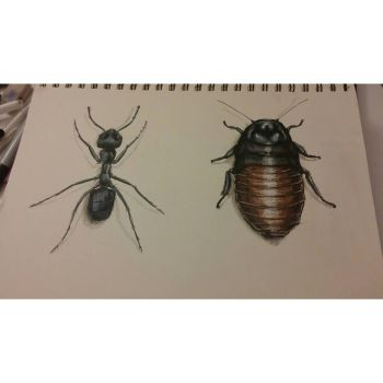 Ant and cockroach sketches by ezgicelep