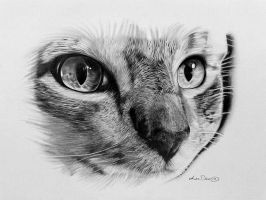 cat portrait by leedeeart