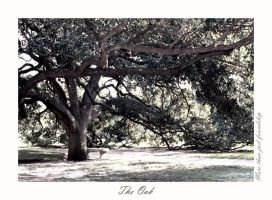 The Oak by shimmerella