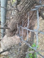 Fencetree. by talicoloribei