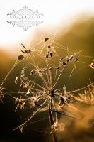 Aurum Autumn by Sophie-Wieland