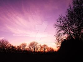 Tree in the Sunset x2 19.01.11 by Dark-Angel15-2010