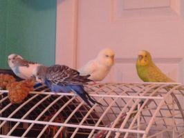 parakeet party by evilweasel24