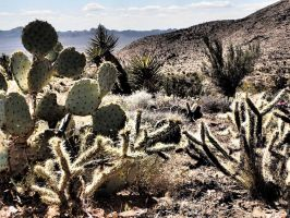 The Desert : needles and thorns and spikes by ClymberPaddler