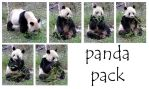 panda pack by syccas-stock