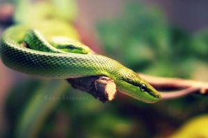 Luscious Green by Karisca