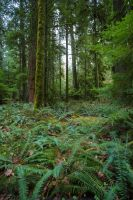 Rainforest Grove Stock by leeorr-stock