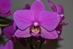 Orchid by FrankAndCarySTOCK