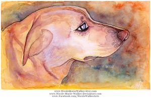 Golden Lab by Nicole-Marie-Walker