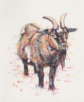 Inky goat by mdlillustration