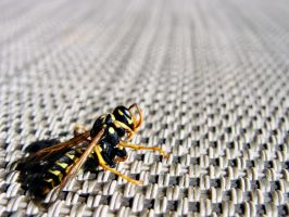yellow jacket. by vanessAAHH