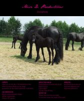 Horse Stock 009 - Friesian by MiszD