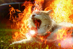 Power of the Fire by Chila-Sahara