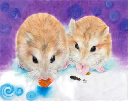 My hamsters -2- by hedspace77