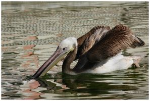 Mr Pelican III by DysfunctionalKid