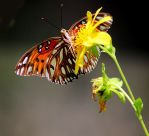 Butterfly and Yellow Flower by winterface