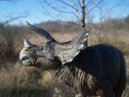 Triceratops 01 by rabidcyrus