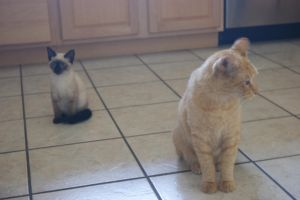 Two Cats by WoodenOx