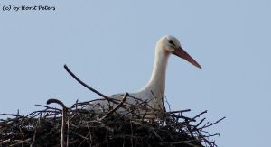 Stork 6 by bluesgrass