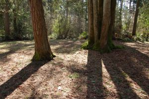 Trees in Park with Shadows by happeningstock