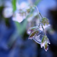 ice_9362 by sjfbetty