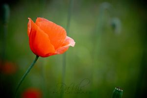 Warmness of the Soul by Davils-Photography
