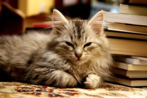 Kitten and Books no. 1 by Mischi3vo