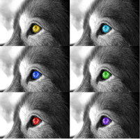 6 Wolf Experiment by Wolf-Shadowrunner