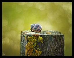 Bath in the bokeh by Alexandra35