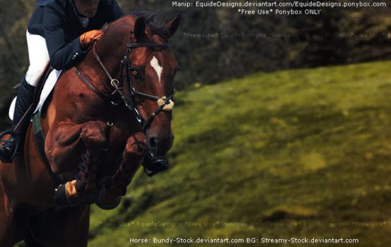 *Ponybox Only* Free Use Horse Pic by EquideDesigns