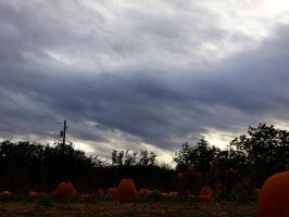 Fall 4 by PHOTOAPHASIA