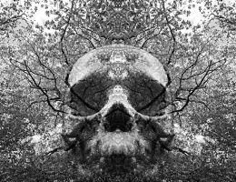 Branches Through Eyes by roro-did-onna