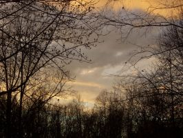 Cloud, Trees by Tuftless
