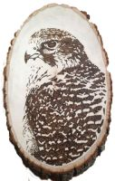 Gyrfalcon Pyrography by lost-nomad07