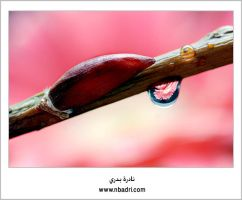 her tear drop by el3sl