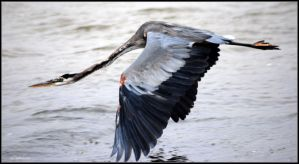 Big Bird Heron by SuicideBySafetyPin