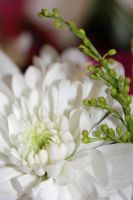 Small Floral Arrangement by Lo-Jobber