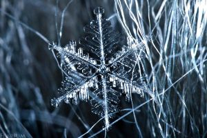 Snowflake by Fearium