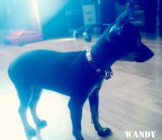 Wandy by roubble