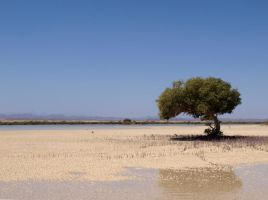 Mangroves by touik